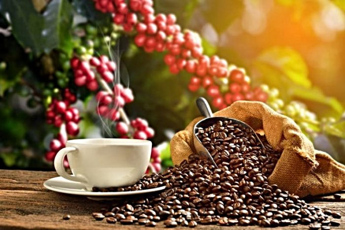 red berries in the background with a main view of a cup of very hot coffee accompanied by dried coffee beans