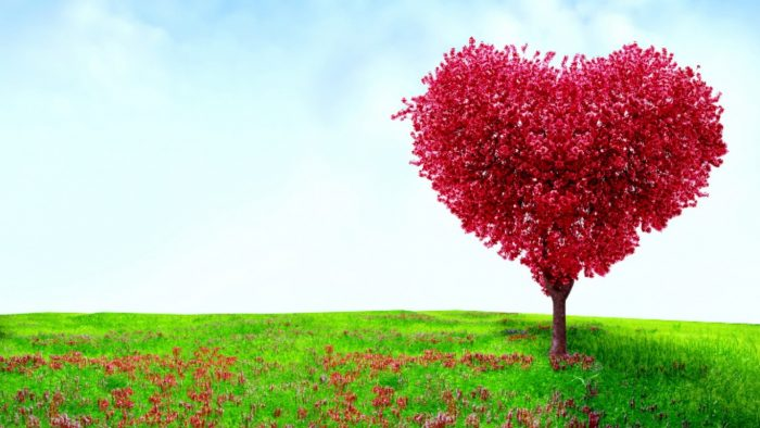 Within an open field with very green grass, a heart-shaped tree with many fuchsia leaves. There are leaves